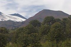 Volcan Llaima в парке nacional Conguillo, Чили Стоковое фото RF