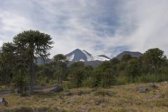 Volcan Llaima в парке nacional Conguillo, Чили Стоковая Фотография