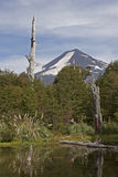 Volcan Llaima в парке nacional Conguillo, Чили Стоковые Фото