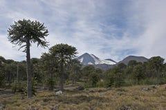 Volcan Llaima в парке nacional Conguillo, Чили Стоковое Фото