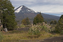 Volcan Llaima in Conguillo nacional park, Chile Royalty Free Stock Photography