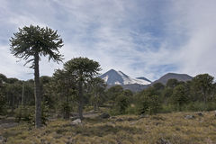 Volcan Llaima in Conguillo nacional park, Chile Stock Photo