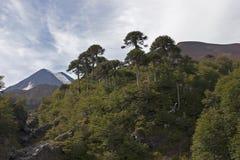 Volcan Llaima en parc de nacional de Conguillo, Chili Images stock