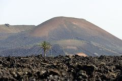 Volcano And Palm Royalty Free Stock Image