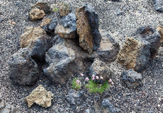 Volcanic desert wasteland rocks and flora - Iceland Royalty Free Stock Photography