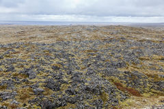 Volcanic field at Snaefellsnes coastline. Royalty Free Stock Photo