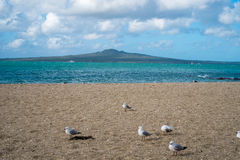 Volcanic island seen from the beach. Rangitoto Island is a volcanic island near Auckland, New Zealand. The 5.5 km wide island is an iconic and widely visible Stock Image