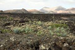 Volcanic Land In Lanzarote Stock Photos
