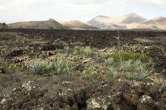 Volcanic land in Lanzarote Stock Photos