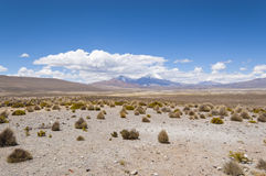 Volcanic landscape. Views of Parinacota and Pomerape volcano in Lauca National Park, Chile Royalty Free Stock Photos
