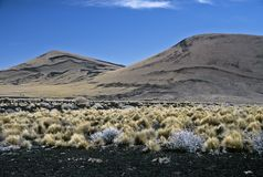 Volcanic Landscape in Argentina,Argentina. Volcanic Landscape in Payunia Provincia Park, Argentina Stock Photos