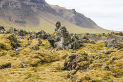 Volcanic landscape in Iceland. View of a volcanic field with yellow moss in Iceland Royalty Free Stock Photography