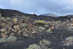 Volcanic Landscape in La Palma Island , the Canaries Stock Photography