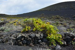 Volcanic Landscape in La Palma Island , the Canaries Stock Photo