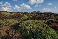 Volcanic landscape, Lanzarote Royalty Free Stock Images