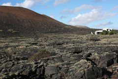 Volcanic landscape on Lanzarote Island, Spain Stock Images