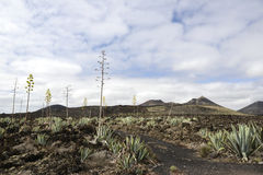 Volcanic landscape in Lanzarote Stock Images