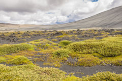 Volcanic landscape in Myvatn area - Iceland. Stock Image