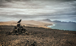 Free Volcanic Landscape Of Fuerteventura, Canary Islands, Spain Royalty Free Stock Photography - 69208147