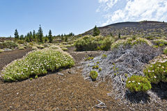 Volcanic landscape of Pico Vieho slope in Tenerife Royalty Free Stock Images
