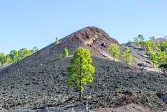 Volcanic Landscape. Teide Nationalpark - bright daylight - no people Royalty Free Stock Image