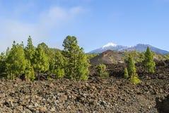 Volcanic Landscape. Teide Nationalpark - bright daylight - no people Stock Images