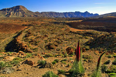 Volcanic landscape of the Teide Volcano National Park Stock Image