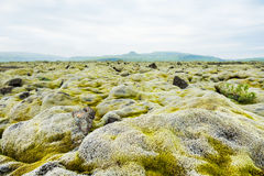 Volcanic lava fields with green moss in Iceland Royalty Free Stock Images