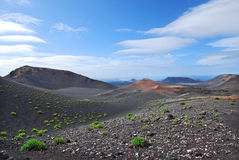 Volcanic mountain landscape in Lanzarote, Canary Islands. Blue sky and clouds in the horizon. Green bushes on the ground Stock Images