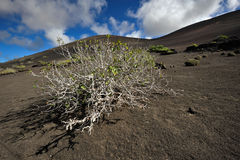 Volcanic mountains at Lanzarote Island, Canary Islands, Spain Stock Photos