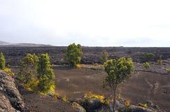 Volcanic Park, Big Island, Hawaii Stock Photo