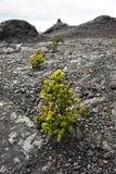 Volcanic Park, Big Island, Hawaii Royalty Free Stock Image