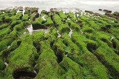 Volcanic reef formation of tidal creeks. Taiwan's only special landscape, green sea lettuce coast. In Laomei Rd., Shimen Dist., New Taipei City 253, Taiwan (R.O Royalty Free Stock Images