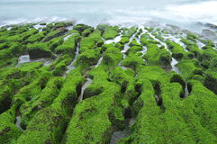 Volcanic reef formation of tidal creeks. Taiwan's only special landscape, green sea lettuce coast. In Laomei Rd., Shimen Dist., New Taipei City 253, Taiwan (R.O Royalty Free Stock Photos