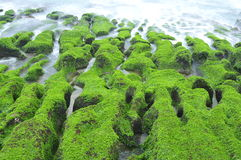 Volcanic reef formation of tidal creeks. Royalty Free Stock Photo