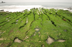 Volcanic reef formation of tidal creeks. Taiwan's only special landscape, green sea lettuce coast. In Laomei Rd., Shimen Dist., New Taipei City 253, Taiwan (R.O Royalty Free Stock Photography