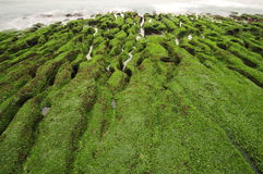 Volcanic reef formation of tidal creeks. Taiwans only special landscape, green sea lettuce coast. In Laomei Rd., Shimen Dist., New Taipei City , Taiwan.nThe Royalty Free Stock Image