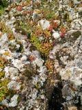 Sardinia. Natural environment. Volcanic rocks stock images