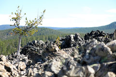 Volcanic rock. In Deschutes National Forest, Oregon Royalty Free Stock Images