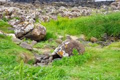 Volcanic Rock Formations at the Giants Causeway in Ireland Royalty Free Stock Photography