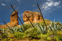 Volcanic rocks in Anaga park, Tenerife. Volcanic rocks with cactus in Anaga Rural park, Tenerife, Canary islands royalty free stock image