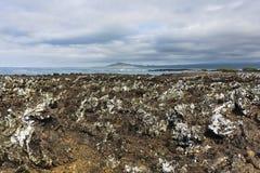 The volcanic Shoreline of Isabela Stock Image