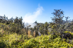 Volcanic Steam Vent in Hawaii Royalty Free Stock Photo