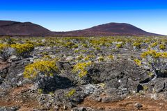 Volcanic vegetation, Piton de La Fournaise, Reunion Island. Volcanic vegetation, Piton de La Fournaise at Reunion Island Stock Image
