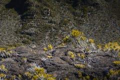 Volcanic vegetation, Piton de La Fournaise, Reunion Island. Volcanic vegetation, Piton de La Fournaise at Reunion Island Royalty Free Stock Image
