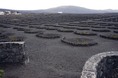 Volcanic vineyard Stock Images
