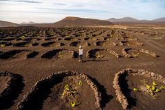 Volcanic vineyard with woman running Royalty Free Stock Photography