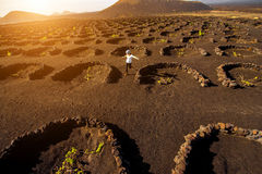 Volcanic vineyard with woman running Stock Image