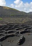 Volcanic Vineyards royalty free stock photos