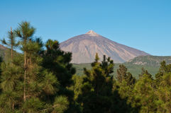 Volcano. Pico de Teide behind a pine forest Stock Photo